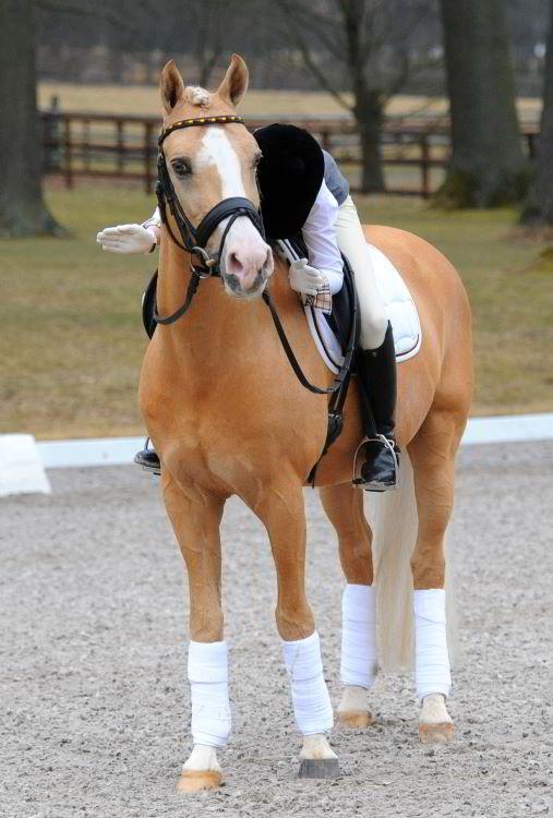 rektale untersuchung pferd