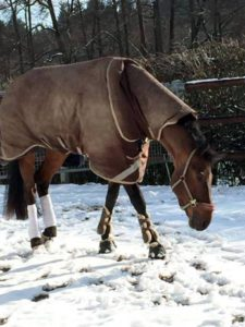 Cosmo im Schnee